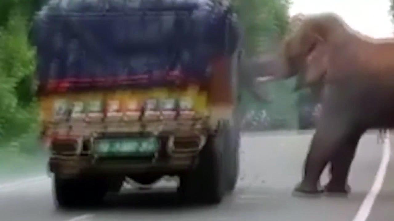 '배고파요'...화물 트럭 덮친 야생 코끼리