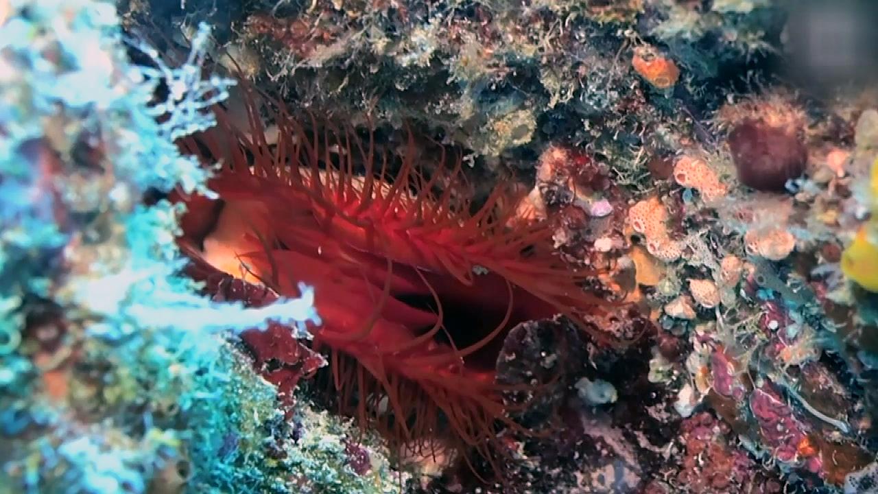 깊은 바닷속 특별한 해양생물 '전기 조개'