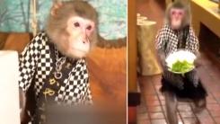 원숭이가 웨이터로 일하는 일본의 전통 선술집