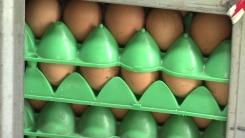 [취재N팩트] '살충제 달걀' 45곳...오늘 검사 마무리