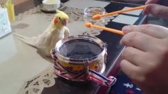 [지구촌생생영상] 주인과 드럼 합주하는 '흥부자' 앵무새