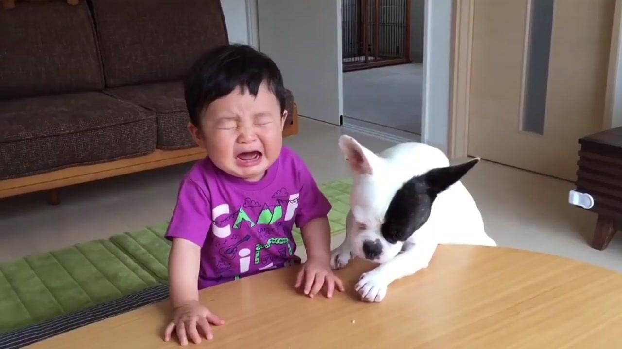[영상] 과자 뺏어 먹은 강아지, 아이가 울자...