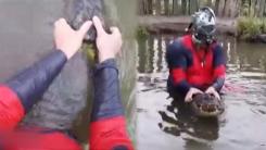[영상] 진짜 '데드풀'을 꿈꾼다?...맨손 악어사냥