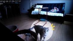 [해보니 시리즈 ⑤] '고양이 홀로 집에'...반려동물 캠 관찰기