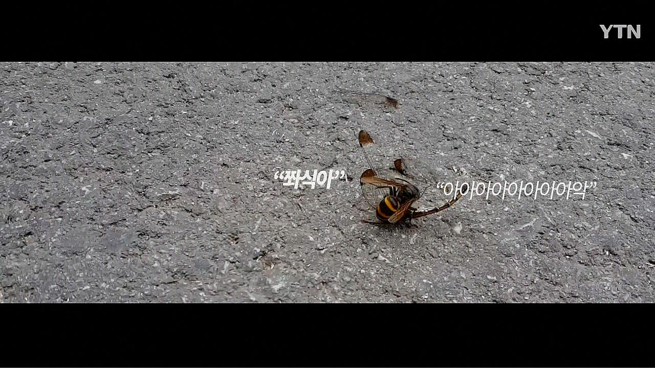 [영상] 말벌과 잠자리의 싸움, 승자는 당연히?
