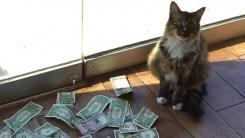고양이 덕분에 문 틈으로 돈 쌓이는 회사