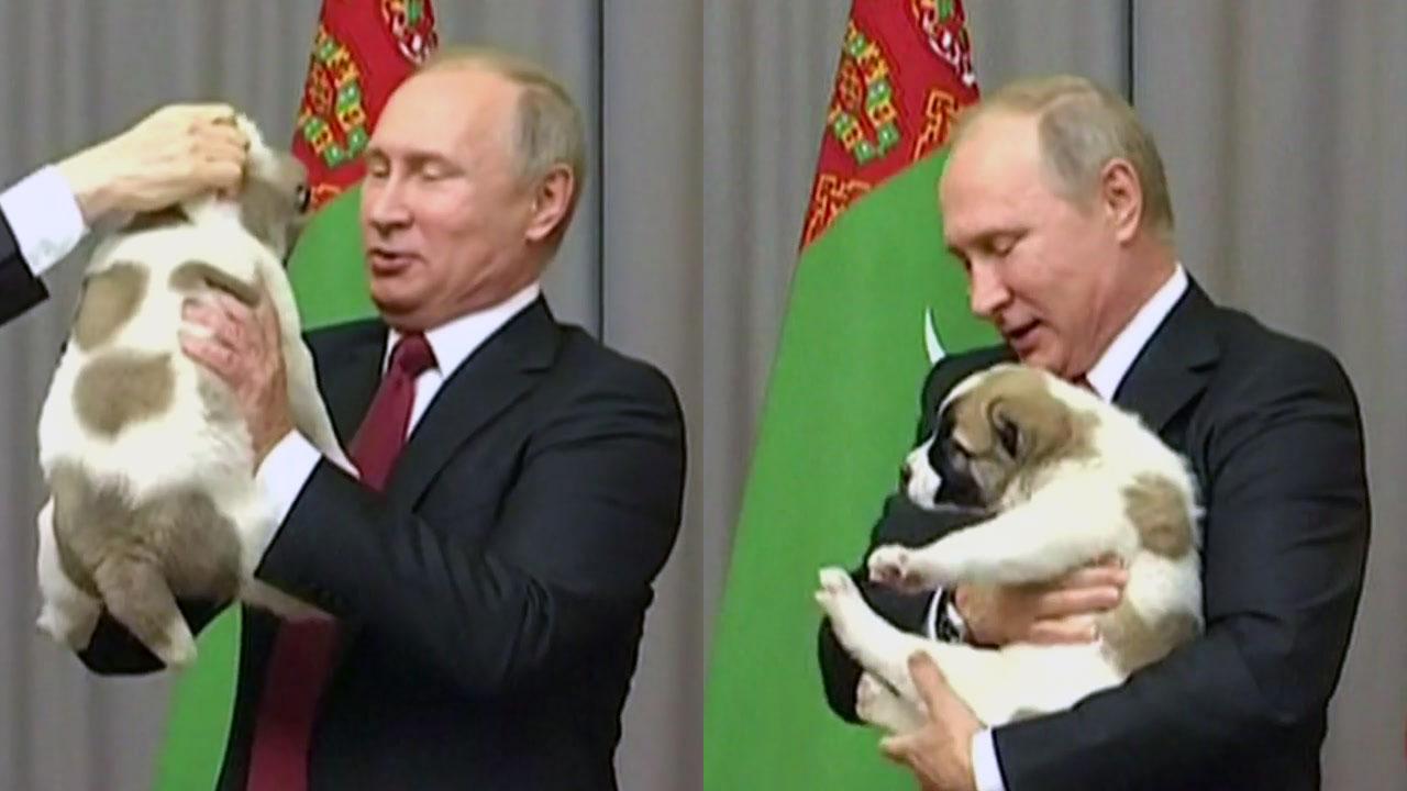 [이브닝] 강아지 선물 받은 푸틴 '애견인 면모' 드러내