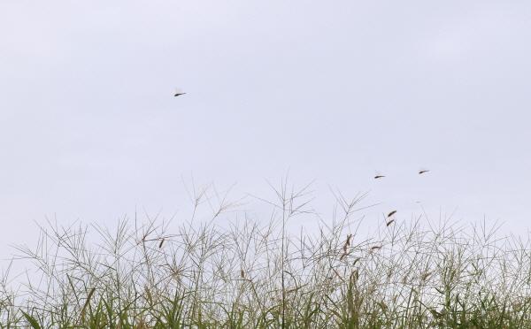 [포토에세이-중랑 청소년 체험의 숲] 곤충들의 즐거운 수다
