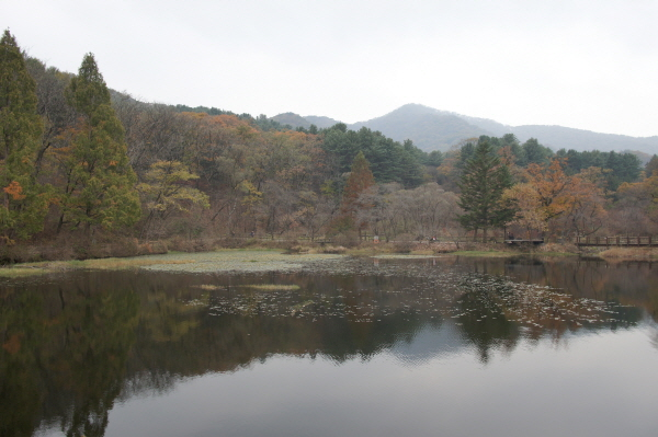 [포토에세이-광릉수목원] 숲의 거울