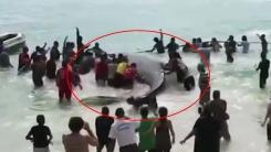해변으로 밀려온 돌고래...되돌려 보내준 관광객