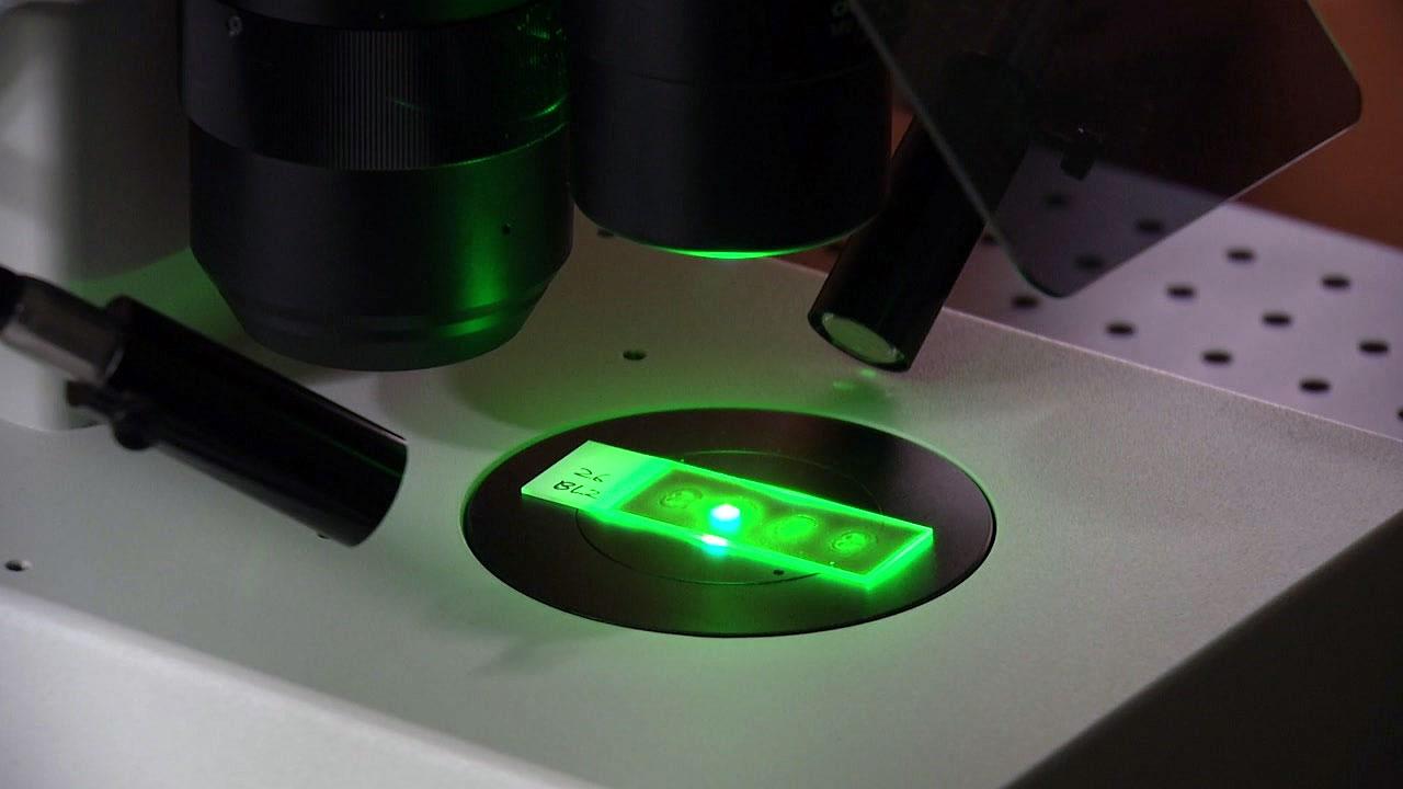 빛과 전자 융합...전천후 첨단 현미경 개발