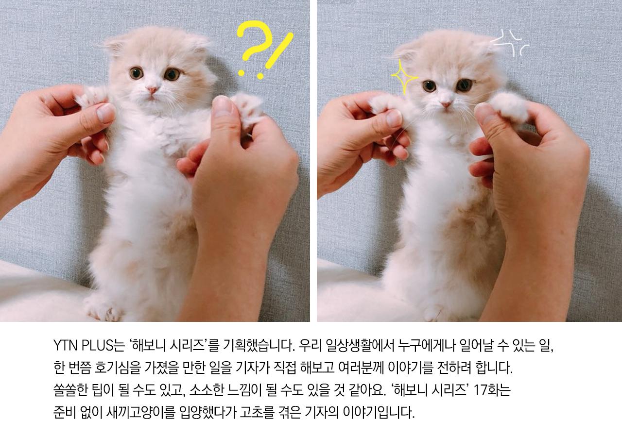 [해보니 시리즈 17] '입양해 죽일 뻔'...눈물의 새끼고양이 입양기