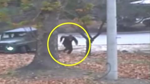 '일촉즉발'...유엔사, JSA 귀순 CCTV 공개