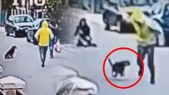 길 가던 여성 덮쳐 강도질한 남성 쫓은 유기견