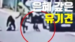 [자막뉴스] 여성 덮친 강도 쫓은 개, 알고 보니...