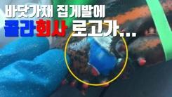 [자막뉴스] 바닷가재 집게발에 콜라회사 로고가...