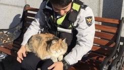 부산 덕천 지구대 '무릎 고양이'의 다복한 근황
