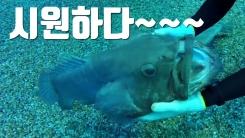 [자막뉴스] 사람에게 마사지 받는 물고기