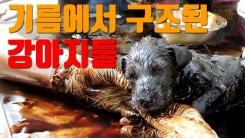 [자막뉴스] '꾸덕꾸덕' 기름에서 구조된 강아지들
