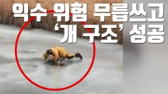 [자막뉴스] 익수 위험 무릅쓰고 '개 구조' 성공