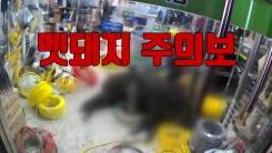[자막뉴스] 굶주려 도심으로 내려오는 '멧돼지 주의보'