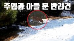 [자막뉴스] 주인과 아들 문 반려견...출동한 경찰이 사살