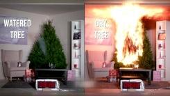 '크리스마스 트리'에 물을 줘야 하는 이유