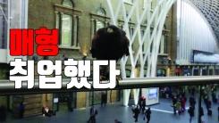 [자막뉴스] 비둘기 사라진 공공장소...똑똑한 파수꾼 '매'!