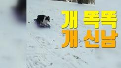 """[자막뉴스] """"썰매? 혼자서도 잘 타요"""" 영리한 개"""