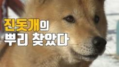 """[자막뉴스] 한국 토종 '진돗개' 뿌리 """"정답 나왔다!"""""""
