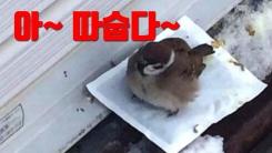 [자막뉴스] 참새들이 왜?...누리꾼 사이에서 화제 된 사진 두 장