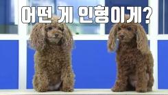 [자막뉴스] 진짜와 똑같은 이 동물 인형의 놀라운 가격