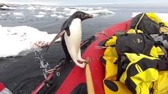 [지구촌생생영상] 지루했던 항해...귀여운 불청객의 등장