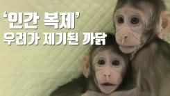 [자막뉴스] 중국, 세계 첫 '체세포핵치환' 원숭이 복제