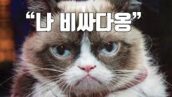 """[자막뉴스] """"내 얼굴 왜 함부로 써?"""" 뚱한 고양이 승소"""
