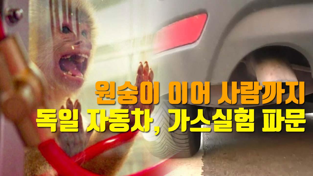 [자막뉴스] 원숭이 이어 사람까지...독일 자동차, 가스실험 파문