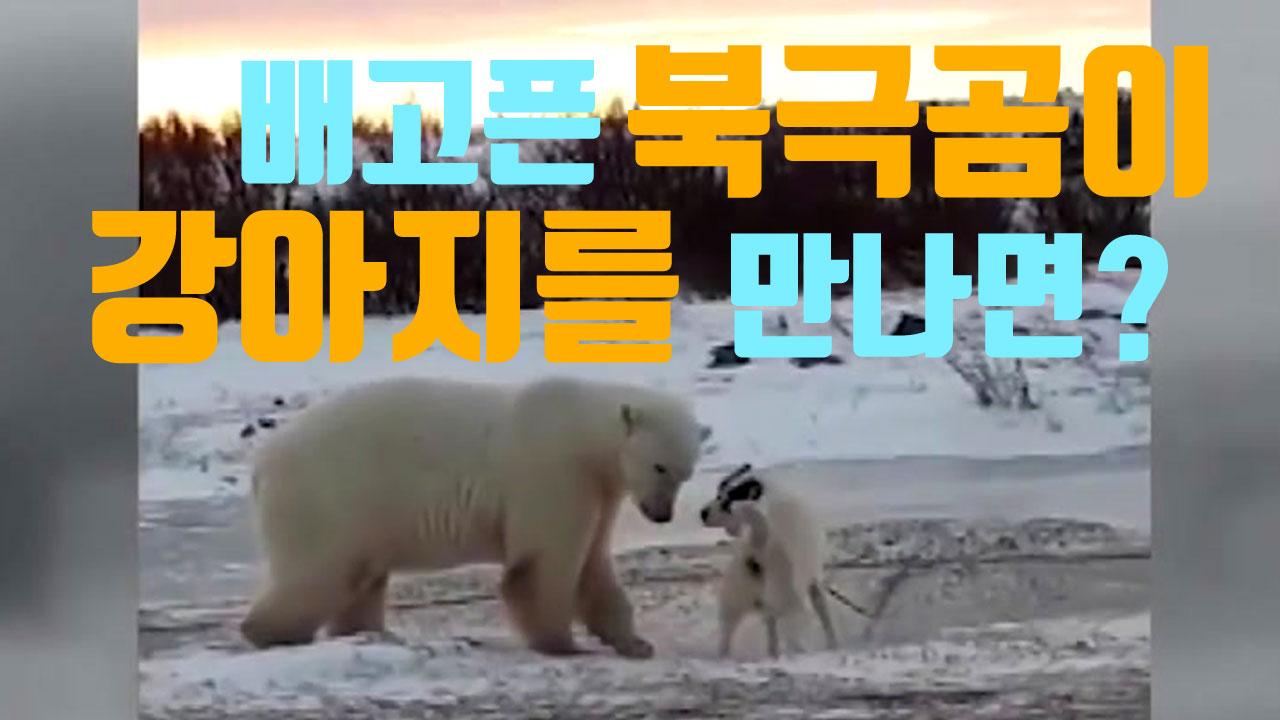 [자막뉴스] 배고픈 북극곰이 강아지를 만나면?
