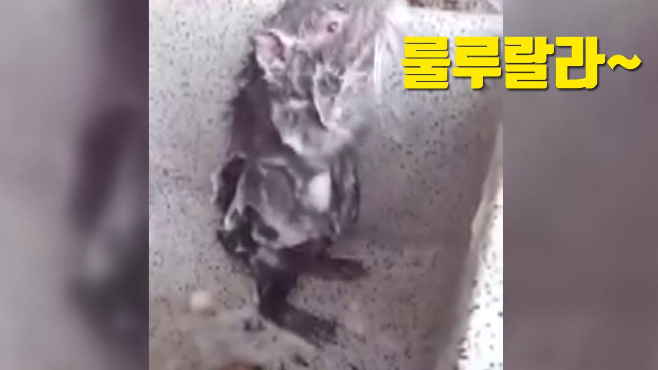 """[자막뉴스] """"룰루랄라~"""" 사람보다 더 샤워 잘하는 쥐"""