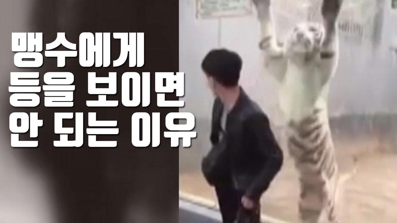 [자막뉴스] 맹수에게 등을 보이면 안 되는 이유