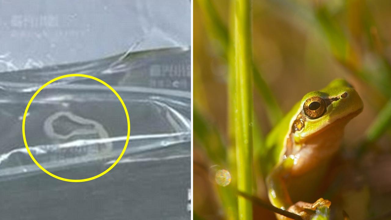 개구리 산 채로 삼킨 여성 몸에서 '13cm' 기생충 발견
