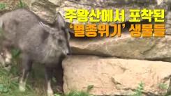 [자막뉴스] 주왕산에서 포착된 '멸종위기' 생물들
