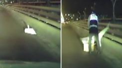 [영상] 도로 위 날지 못하는 '고니' 구조 작전