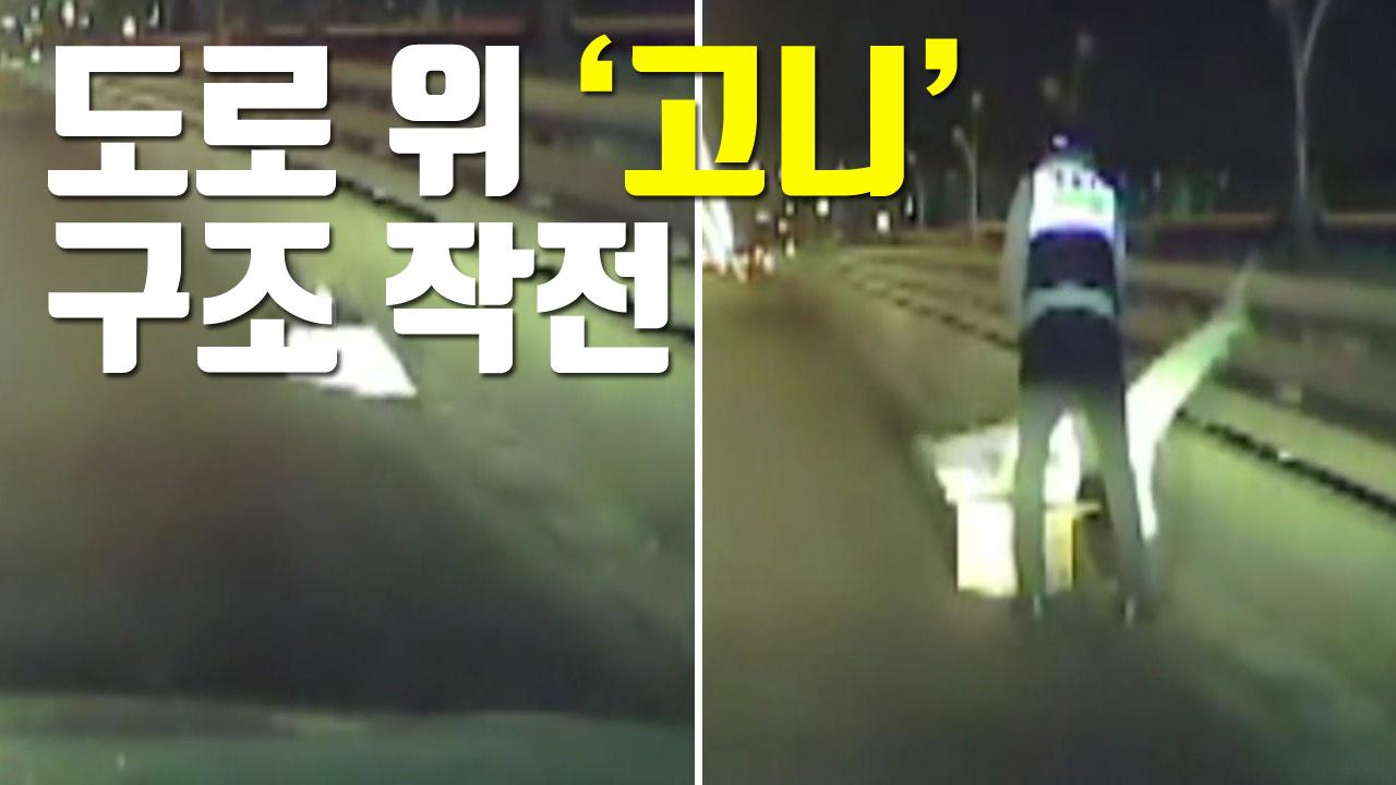 [자막뉴스] 도로 위 '천연기념물' 구조 작전