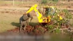 [영상] 굴착기까지 동원한 '새끼 코끼리 구출 작전'