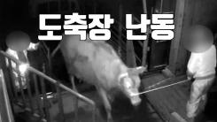 [자막뉴스] '도축' 직전 소의 난동...2명 사상
