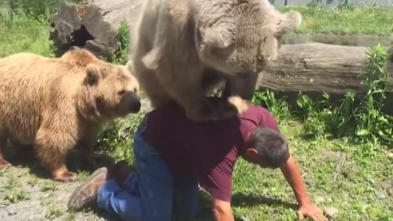 [지구촌생생영상] 야생곰이야? 애완곰이야?