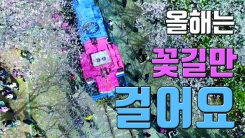 [자막뉴스] 36만 그루의 벚꽃이 반긴다 '진해 군항제'