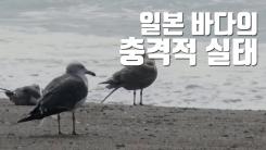 [자막뉴스] 日 해양 미세 플라스틱 농도, 세계 평균의 27배!