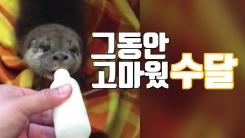 [자막뉴스] '튼튼하게 자라거라'...구조했던 수달 2마리 방사