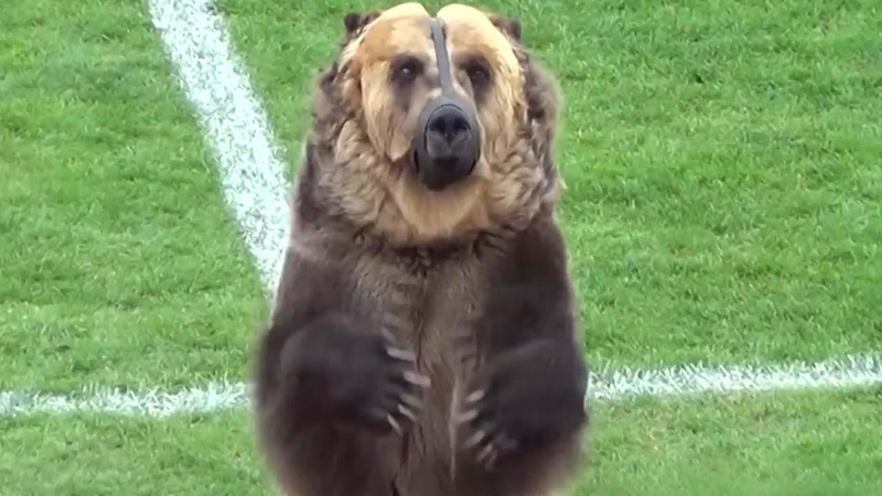 거대 곰이 축구 경기장에 등장한 이유는?